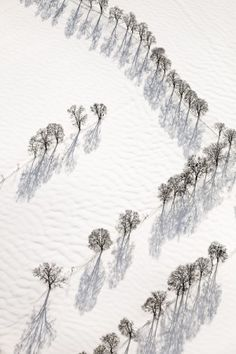 Aerial view of rows of trees in the snow