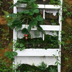 Çilek yetiştirme dolabı....:) :) :) :) Ladder Decor, Outdoor Structures, Plants, Home Decor, Decoration Home, Room Decor, Planters, Plant, Planting