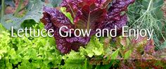 Learn2Grow: Home and Garden, Outdoor Living, Garden Deals, Garden Community…