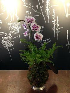 Decor - Orchid Kokedama Moss Ball