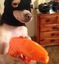 #wattpad #de-todo solo imágenes que me encuentro por ahí, algunas muy raras, otras no tanto . ♡ Funny Animal Jokes, Funny Dog Memes, Cute Memes, Really Funny Memes, Funny Animal Pictures, Cute Funny Animals, Stupid Funny Memes, Funny Cute, Funny Dogs
