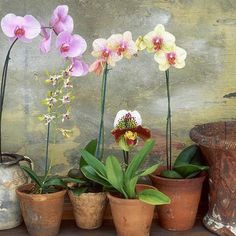 Caring for Orchids—What Do I Do With My Gift Orchid?