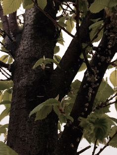 Trees and pests Watch News, Calgary, Trees, Gardening, Plants, Tree Structure, Lawn And Garden, Plant, Wood