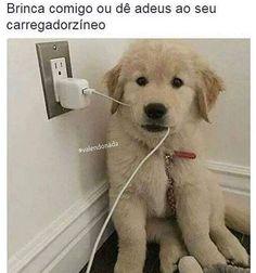#FilhoDe4Patas #AmoCachorro
