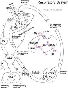 Gcse Biology Aqa Mind Maps 11156571 besides 532346293 besides Sciences moreover 455074737319759253 together with Cell biology. on biology mind map