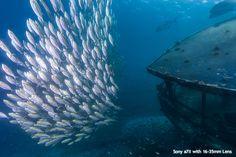 Sony Underwater Imaging Solutions from Optical Ocean Sales!