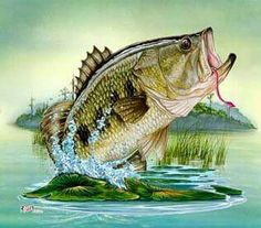 Bass Images Of Fish Largemouth Bass Fishing Wallpaper