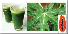 hojas de papaya para plaquetas bajas