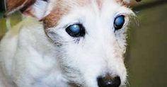 Abbandonato in mezzo alle sue feci: il triste destino di un cane cieco