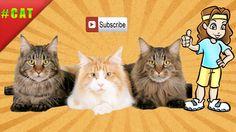 Кошки видео (Моё видео 3 Films)