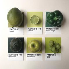 PANTONE 15-0343 #Greenery is the Color of the Year - but we love all greens : @tom.lowe