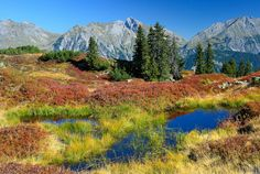 Small pond and blueberries in the Alps of Vorarlberg, Austria