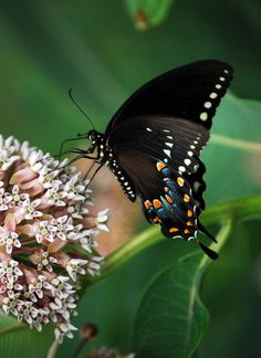 Butterfly On Flower Photograph II Insect Photo Art by ApertureWerx, $30.00