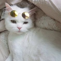 CAT #sunglasses