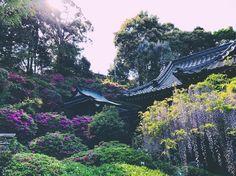 藤山神社  #長崎 #佐世保  #nagasaki #sasebo #japan #日本 #japan_of_art #japan_of_insta #pink #flowers #ピンク  #紫 #holiday #iphone #photography #photo #お洒落な人と繋がりたい #beautiful #休日 #春 #spring  #デジタルでフィルムを再現したい #藤 #purple #神社 #shrine #柚木 #vscocam #vsco http://tipsrazzi.com/ipost/1508803074483269663/?code=BTwWGb6l7Af