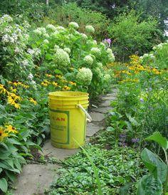 bucket list Vines, Bucket, Bloom, Spaces, Buckets, Arbors, Aquarius, Vitis Vinifera