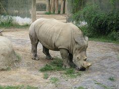 birmingham zoo memorial day
