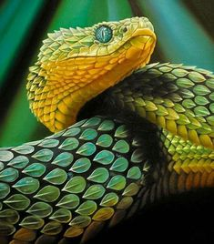 Atheris is a genus of venomous vipers found only in tropical subsaharan Africa, excluding southern Africa. Confined to rain forest areas, many members have isolated and fragmented distributions snake Pretty Snakes, Cool Snakes, Beautiful Snakes, Colorful Snakes, Reptiles Et Amphibiens, Cute Reptiles, Nature Animals, Animals And Pets, Cute Animals