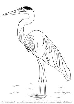 Drawing Techniques Learn How to Draw a Great Blue Heron (Birds) Step by Step : Drawing Tutorials Bird Drawings, Animal Drawings, Pencil Drawings, Drawing Birds, Easy Drawings, Freetime Activities, Crane Drawing, Art Tutorials, Drawing Tutorials