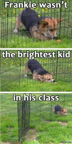 Dump a day Attack of the Funny Animals 50 Funny Animal Pictures Funny Animal Jokes, Stupid Funny Memes, Cute Funny Animals, Funny Relatable Memes, Funny Animal Pictures, Cute Baby Animals, Funny Dogs, Funny Stuff, Funny Quotes
