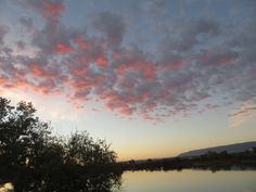 Early morning pink-tinged clouds at the pond by the eastside dog park, Casper, Wyoming.