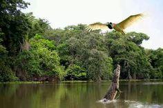 Belezas do Brasil - Pantanal Matogrossense