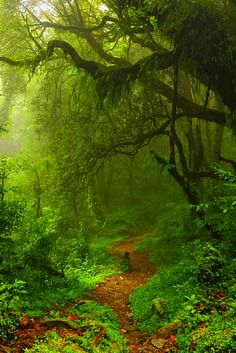 Subtropical Forest, Nepal | Easy Planet Travel - World travel made simple