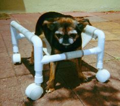 How precious, little dog with mobility issues in homemade cart.