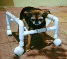 Best Friend Dog Wheelchair Youtube