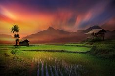 a paint of a dream land by iD's  ( a rice field )
