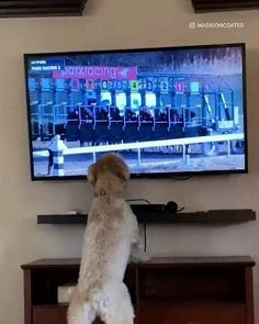 Funny Horse Videos, Funny Animal Videos, Funny Animal Pictures, Cute Funny Dogs, Cute Funny Animals, Cute Baby Animals, Horse Illustration, Secret Life Of Pets, Cool Pets