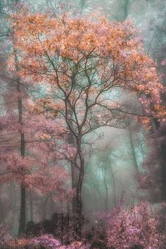 Deep roots: 'Magical Forest' by Tammy Cook Photography.
