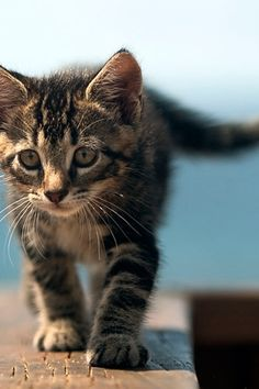 #Kitten #Kitty #Cat #Cute #Adorable #Tiny #Fluffy #Paws #Whiskers