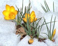 Çiçek açmak istiyorum kara kışın ortasında Varsın soğuk vursun Olursa olsun Ben lüzumsuz Coşmak istiyorum...