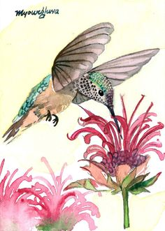 A hummingbird, watercolor by Anna Lee