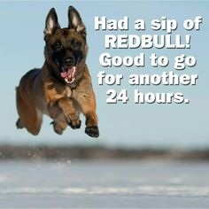 Haha...red bull???