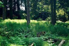 Park Seleger Moor, czyli czy warto zapłacić za kontakt z naturą? Switzerland, Country Roads, Mountains, Park, Plants, Photography, Travel, Photograph, Viajes