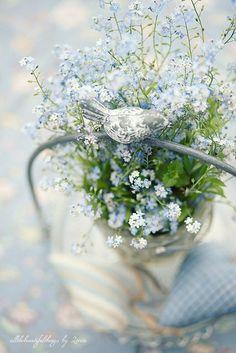 lovely little blue flowers
