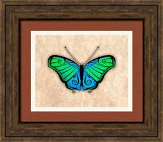 Green And Blue Butterfly Framed Print By Maria Ines Quevedo