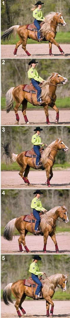 Softening Exercise for Your Speed Horse by Sherry Cervi