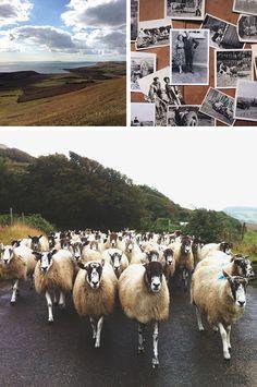 Farm to needle: Benjamin Hole talks about getting into the yarn biz