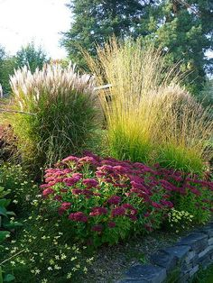 Garden ideas: grasses, sedum and coreopsis. This might look good on the bank in front of our house.Garden ideas: grasses, sedum and coreopsis. This might look good on the bank in front of our house. Lawn And Garden, Garden Art, Garden Beds, Miscanthus Gracillimus, Front Yard Flowers, Flowers Garden, Herbs Garden, Garden Shrubs, Garden Types