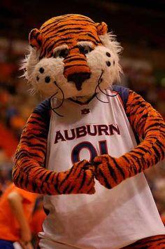 AU Tiger....Albie