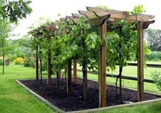 Check out How to Make Wine in Your Backyard   Winemaking Basics for Homesteading Beginners at http://pioneersettler.com/how-to-make-wine-at-home/