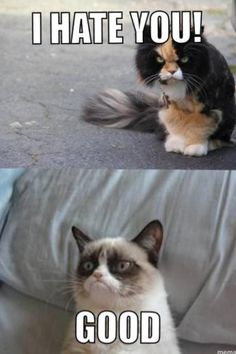 It's stupid how much I love Grumpy Cat! (BTW, her real name is Tartar Sauce aka Tard. :))