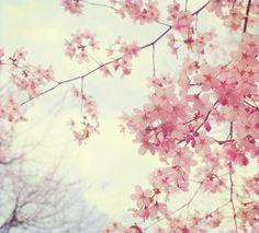 que hermosa rama d flores