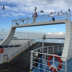 Free ride for seagulls on a car ferry. #Travel # #Turkey #SerifYenen