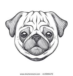 Cute pug. Portrait of dog in sketch style. Hand drawn vector illustration. Black and white monochrome animal illustration.