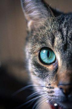 Un gato mira primero con un sólo ojo.