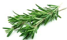 Benih Herbal Rosemary per paket di Lapak Mumtaz Store Natural Cancer Cures, Natural Cures, Natural Healing, Natural News, Essential Oils For Hair, Cancer Fighting Foods, Cancer Foods, Healing Herbs, Herbal Medicine